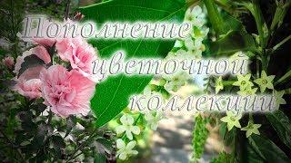 Фото Мои комнатные цветы на балконе пополнение коллекции