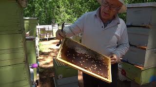 Пасека #11 Kак сделать отводок пчел ? Пчелиный эксперимент 1 - Отводок С Нуля