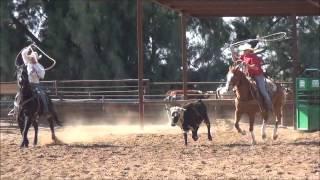 Jonesie - 7yo Sorrel AQHA Gelding Head Horse For Sale