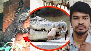 Never go near these 10 Animals | Tamil