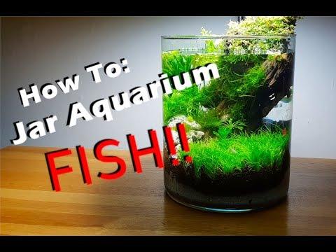 how-to:-1-gallon-jar-/-vase-aquarium-|-fish-&-shrimp-added!