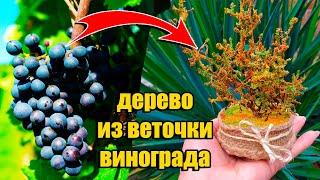 оСЕННИЕ ПОДЕЛКИ ИЗ ПРИРОДНОГО МАТЕРИАЛА  DIY Дерево из виноградной ветки  Подарок своими руками