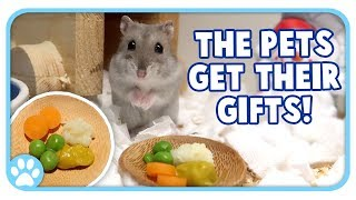 Solstice Celebrations + The Pets Get Their Gifts! || Vlogstice Final Day