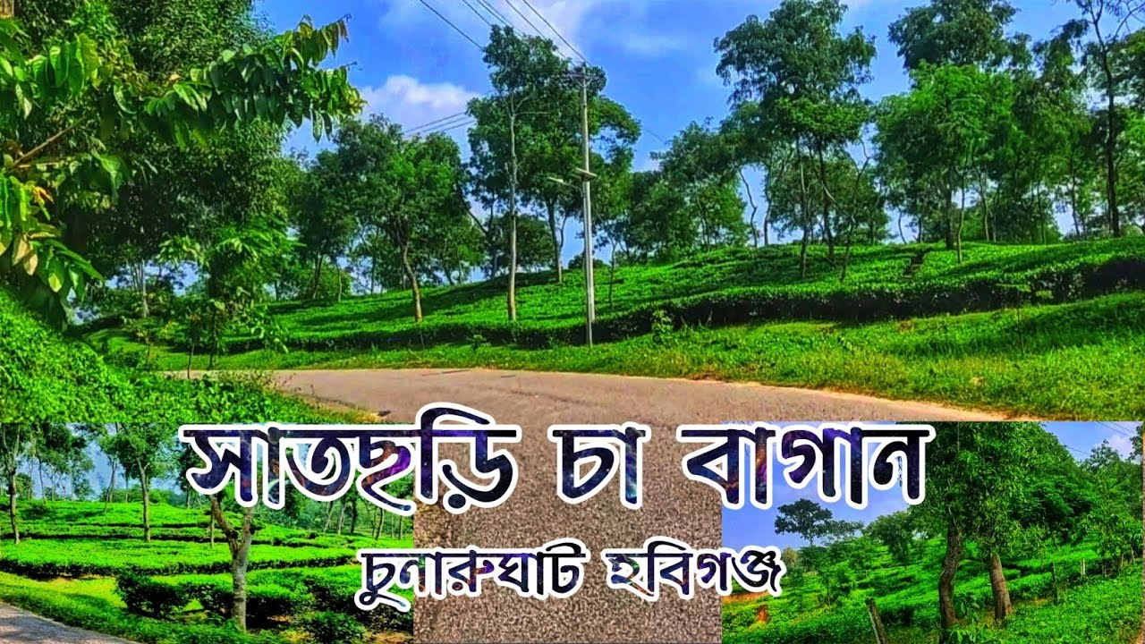 Download তেলিয়াপাড়া থেকে সাতছড়ি জাতীয় উদ্যান, হবিগঞ্জ। Teliapara to Satchhari, Habiganj.     ES Blog   