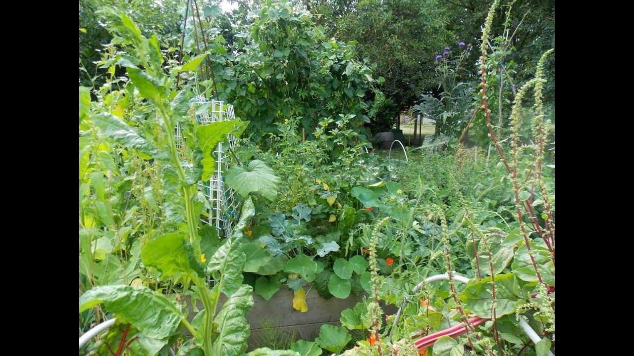 mon jardin en permaculture fin juillet 2016 youtube