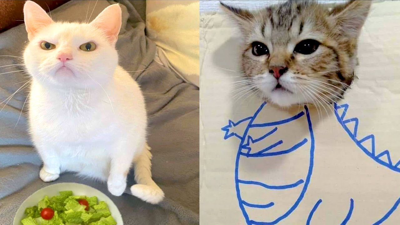 BEST CAT MEMES COMPILATION OF 2020 - 2021 PART 59 (FUNNY CATS)