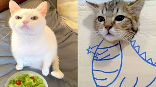 BEST CAT MEMES COMPILATION OF 2020  2021 PART 59 (FUNNY CATS)