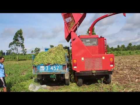 napier grass unloading