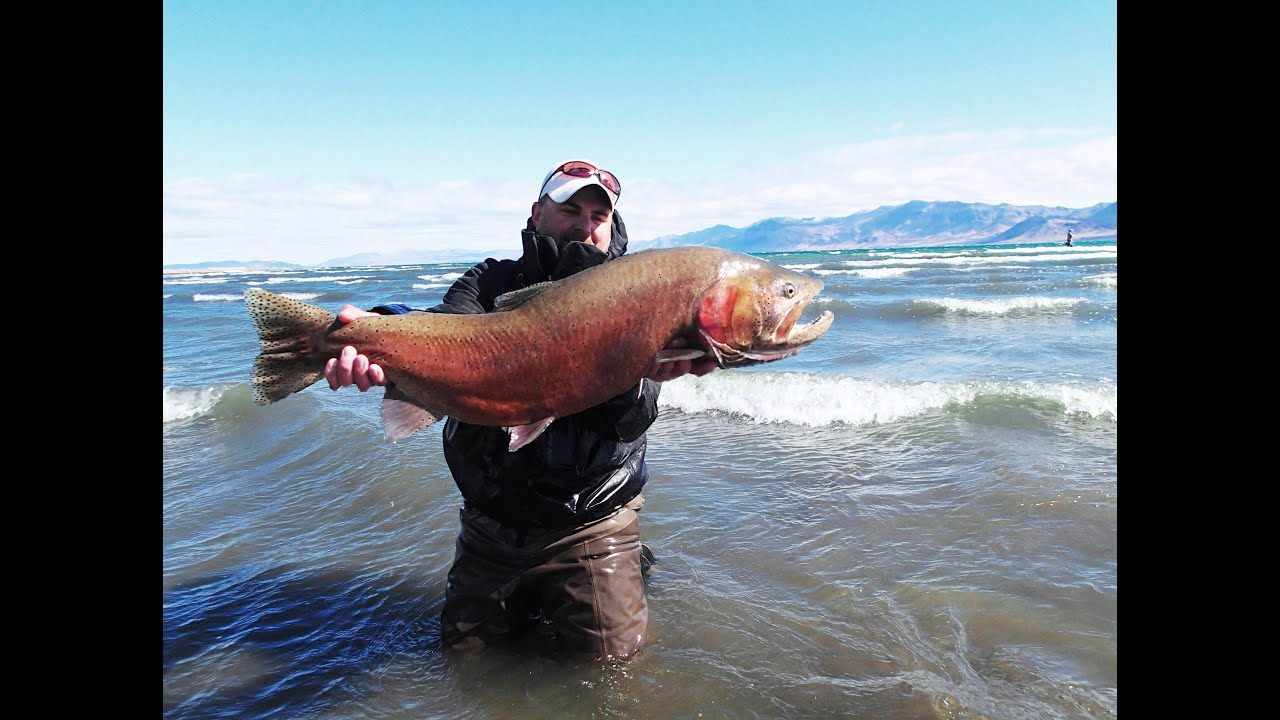 Pyramid lake monster lahontans spring 2015 youtube for Fly fishing nevada