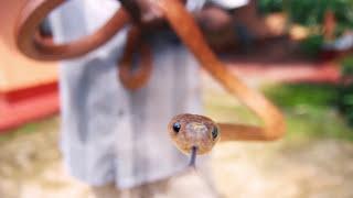 Loving Lanka [PL]