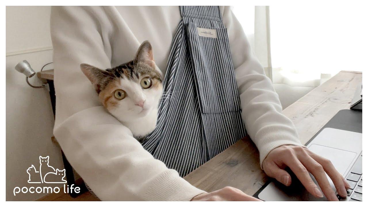 甘えんぼ猫を満足させながら仕事をする方法を模索した結果こうなりました…笑