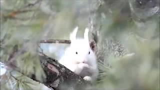 白いエゾリス見つけました☆ 白いエゾリス 検索動画 23