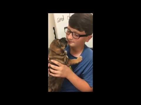 Video of adoptable pet named Patrick White in MS