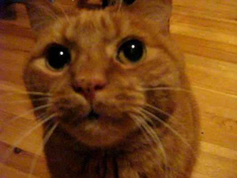 Thumbnail for Cat Video Cat meowing and purring