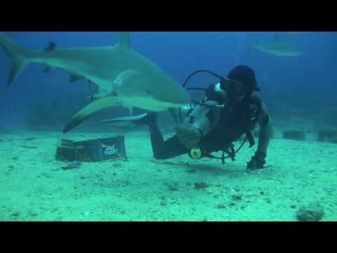 Week 15, 2011 ( Daily Log, Thu, Apr 14 - Shark Dive ) Ocean Explorers Dive Center in St. Maarten