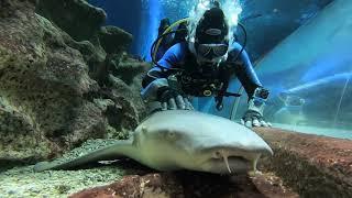 Diving in Aquarium Saint Petersburg, Russia, march 2020