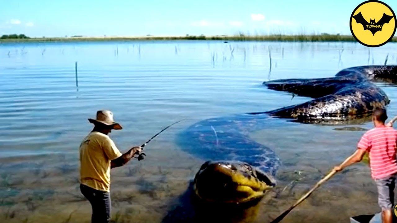 Cinco cosas que debe saber sobre la Amazona, que se consume ...