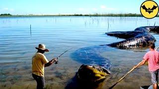5 Animales a los que JAMÁS debes acercarte en la selva amazónica. thumbnail