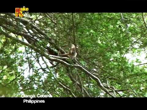 Make My Trip Travel TV - Bird Watching in Olango and Miss Scuba at a Cordova Resort, Philippines