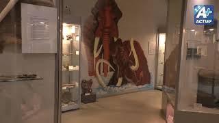 Bodemvondstendag IJstijdenmuseum in Buitenpost