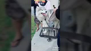 Amazing animals complétion 2018