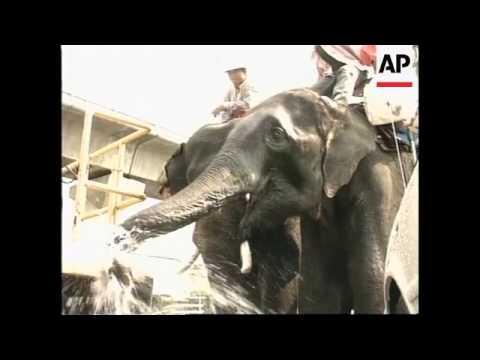 THAILAND: BANGKOK: ELEPHANT HANDLERS STAGE PROTEST