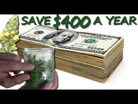 How To Save $400 A Year With Medicinal Herbs