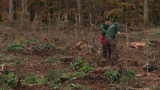 Plantation de 125 chênes en forêt de Senonches en Eure-et-Loir