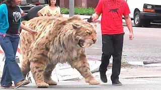 One mieszkają z ludźmi! Najstraszniejsze zwierzęta świata