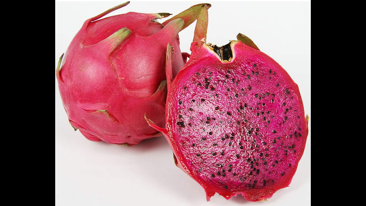 2016 紅肉火龍果生長過程_紅肉火龍果 Red meat pitaya fruit 赤肉ピタヤ La carne roja Pitaya La viande rouge Pitaya - YouTube
