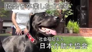 日本介助犬協会を卒業した犬たち thumbnail