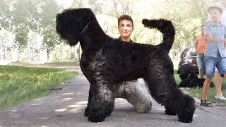 10 Most Unknown Russian Dog Breeds