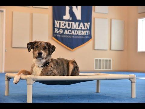 Finn (Catahoula / Lab mix) Boot Camp Dog Training Video Demonstration