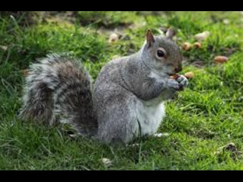 Kid video - Funny Squirrels for kids - lovely Squirrels for ...