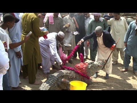 Pakistan's Sheedis celebrate