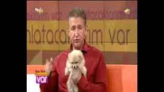 Pomeranian Boo Cinsi Elit Yavrular Oylum Talu'ya Konuk Oldu