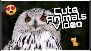 cute and funny animals video - best videos