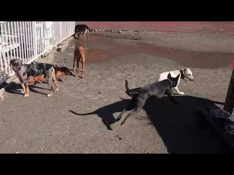 Dog Daycare Park Vancouver Hotel Sitter Trainer Training