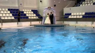 Свадебная церемония в дельфинарии