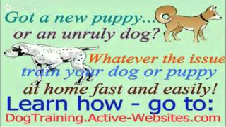 Online Dog Or Puppy Training For Your Dachshund