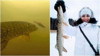 С женой на рыбалке и снова с рыбой! Подводное видео атаки щуки на живца. Застряли на машине в лесу.