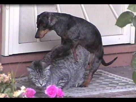 best eco friendly cat litter