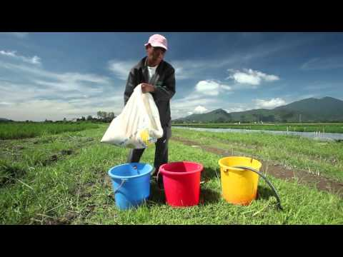 Global Information System on Plant Genetic Resources for Food and Agriculture