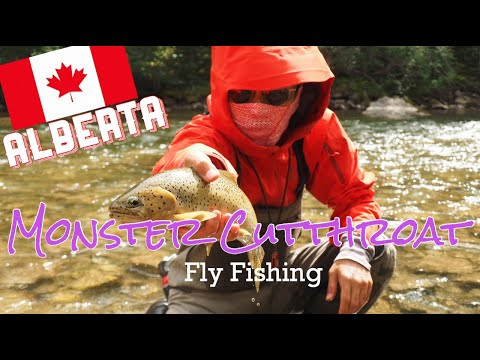 Fly Fishing Cutthroat Trout Oldman River Southern Alberta, Canada カナダでフライフィッシング カットスロートが釣れた