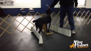 Teaching Your Dog Touch And Shake
