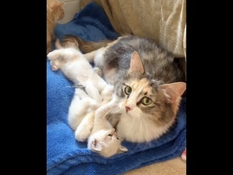 A Cat Mama's Love - Happy Mother's Day!