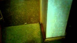 Посмотрите, не пожалеете. Потоп!.(залили соседи с верху. вода лилась из потолка. Слава Богу спасли дегу! Он стоял прямо под этим водопадом., 2012-05-13T19:07:09.000Z)