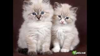 Фото милых котят!!!