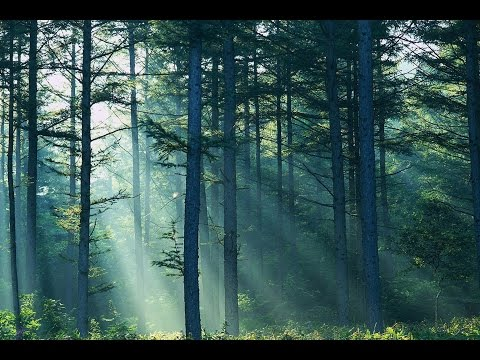 How to manage a Woodland