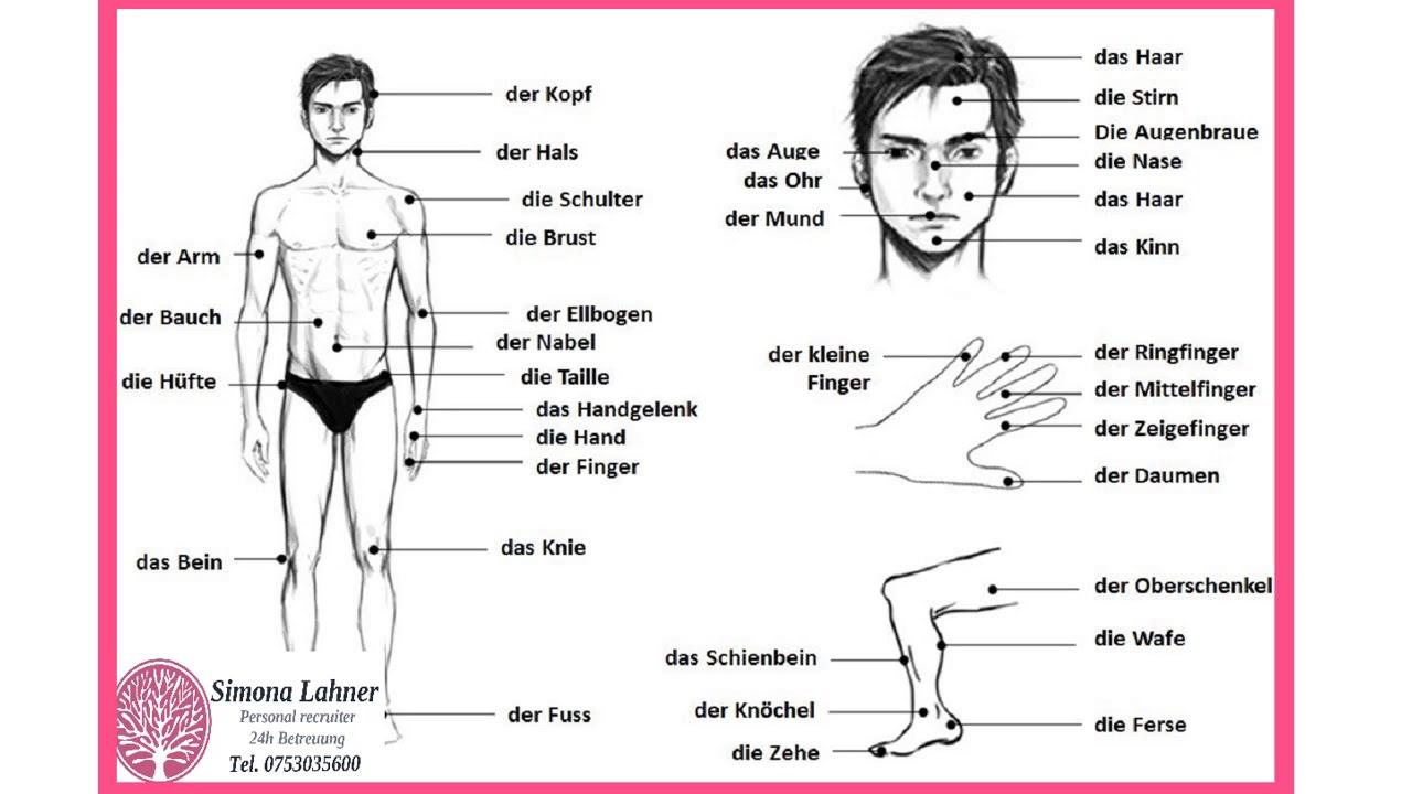 Părțile corpului uman